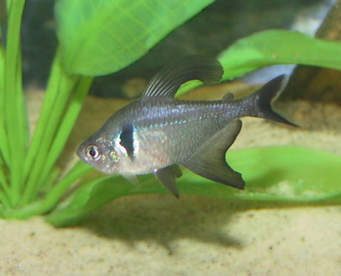 Types of animals in freshwater biomes for Types of fish that live in ponds